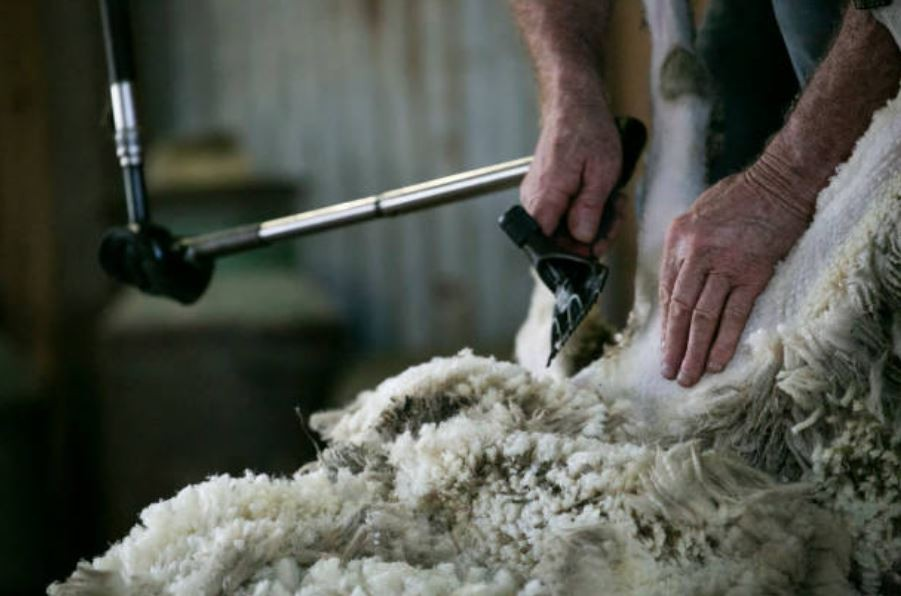 Restrictions on wool exports to China would severely affect Australia's Rural Based Wool Industry