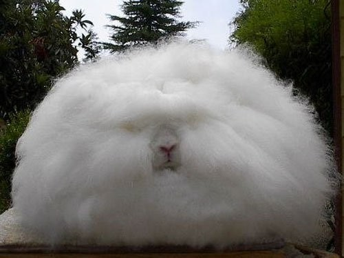 Some Interesting Facts  about Angora Wool